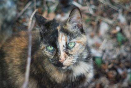tortoiseshell cat on leaves