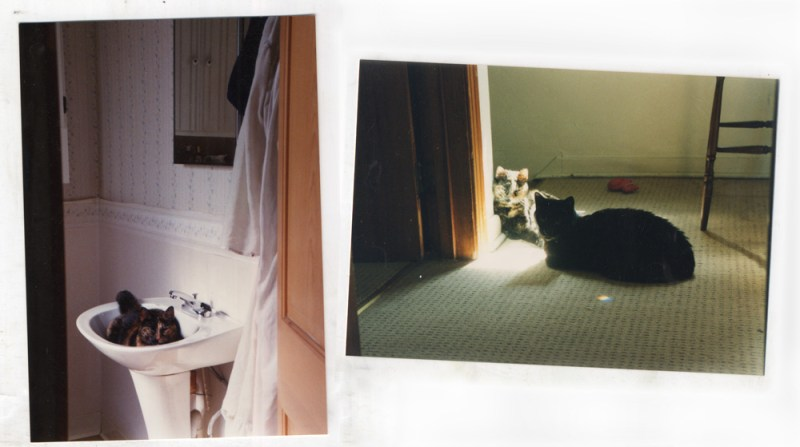 photos of two cats