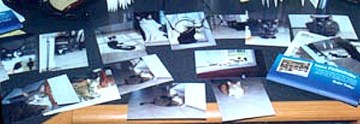 photos of cats on desk