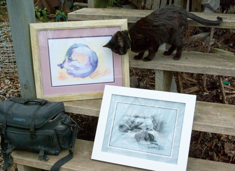 black cat with cat paintings