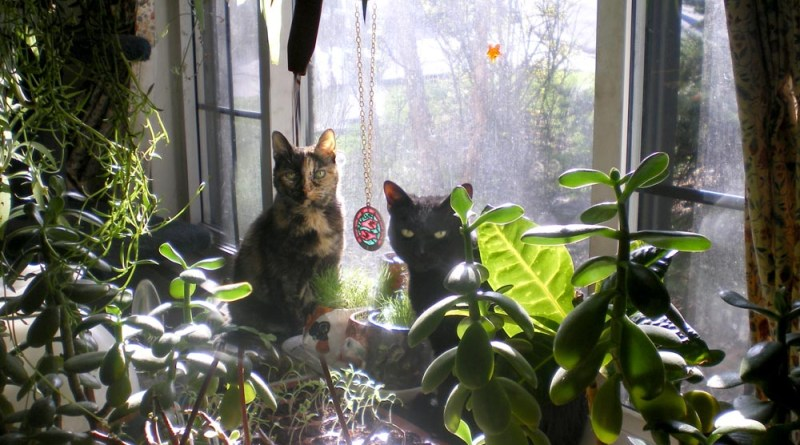 tortoiseshell cat and black cat in garden