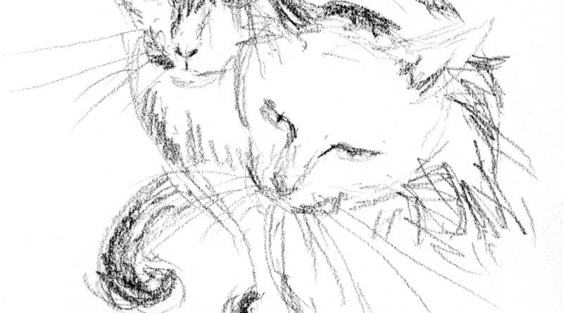 charcoal pencil sketch of two cats