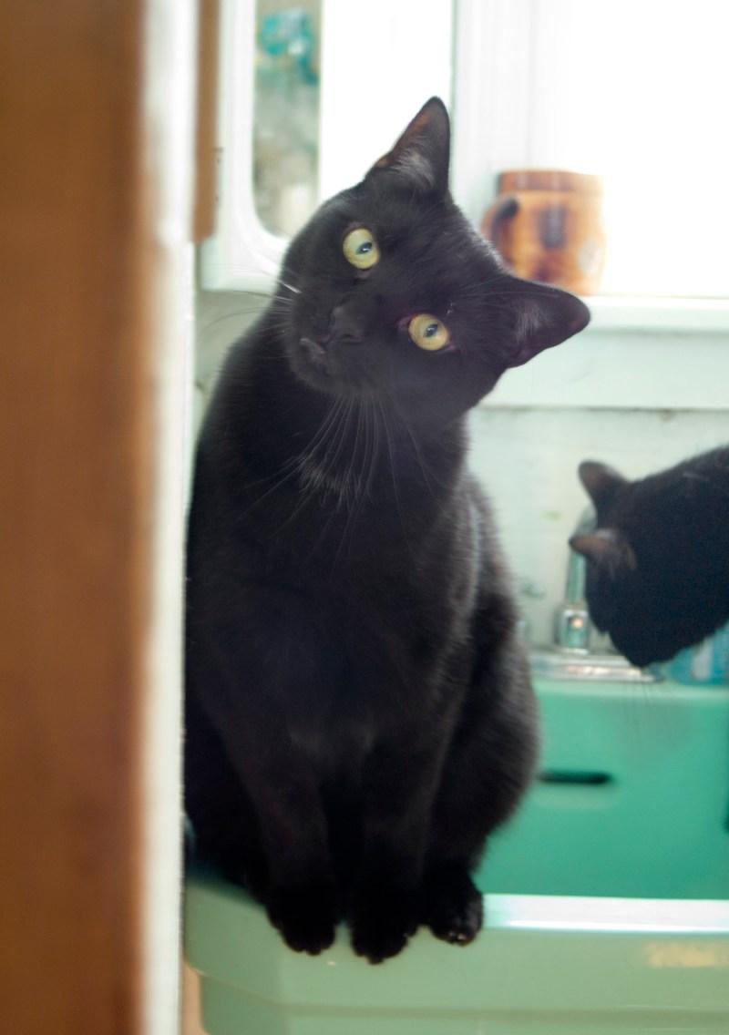 black cat on green sink.
