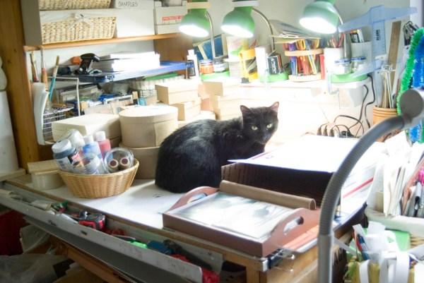 black cat on table