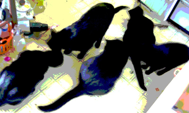 posterized cats