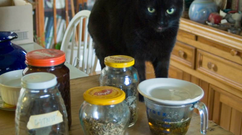 black cat with herbs for tea