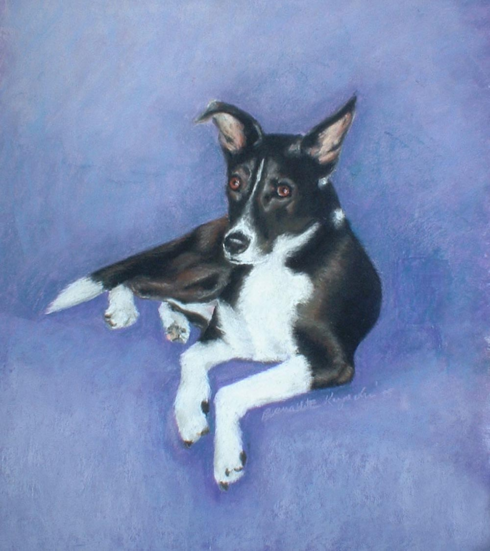 portrait of black and white dog
