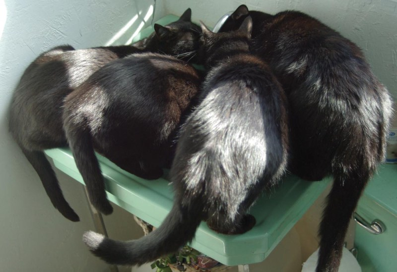 four black cats at green sink