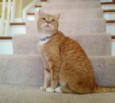 orange cat on steps.