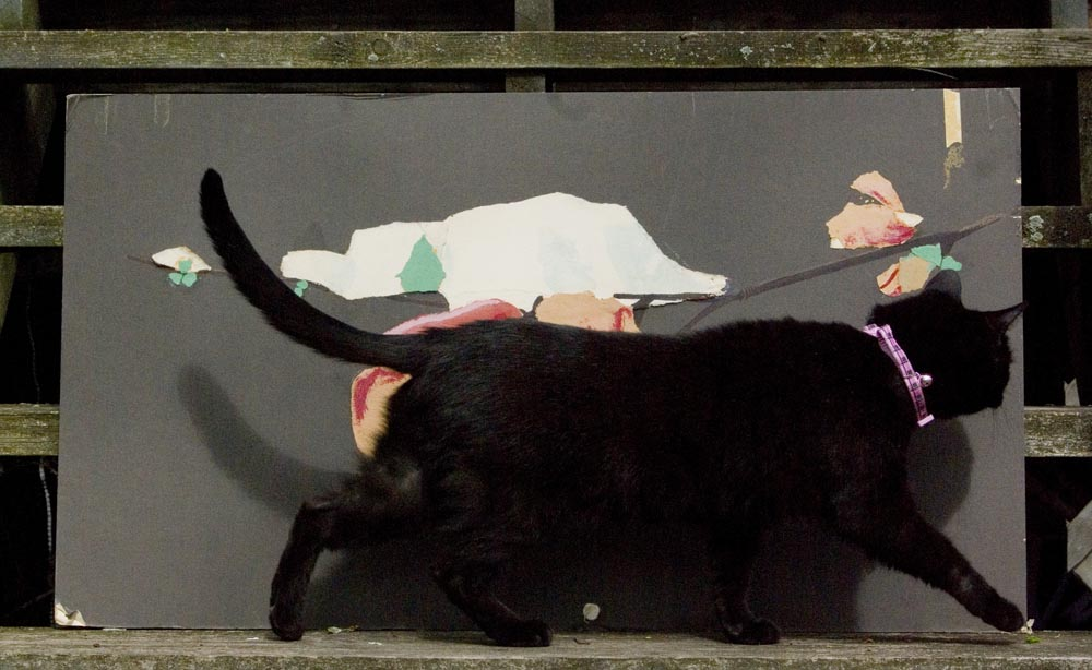 black cat with artwork