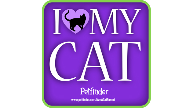love-my-cat-632