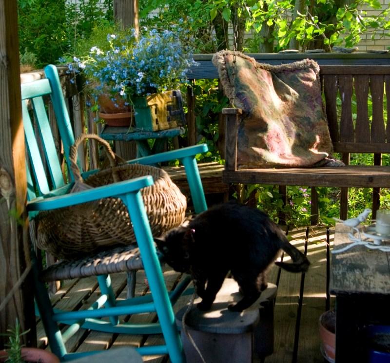 black cat on deck