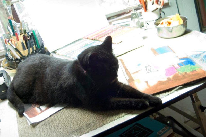 black cat on desk