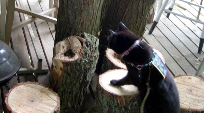black cat with tree logs