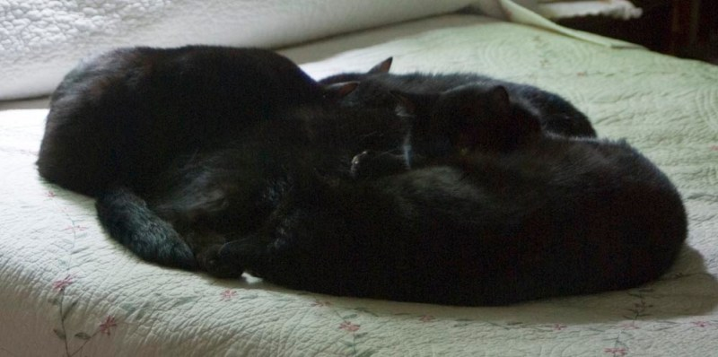 pile of black cats