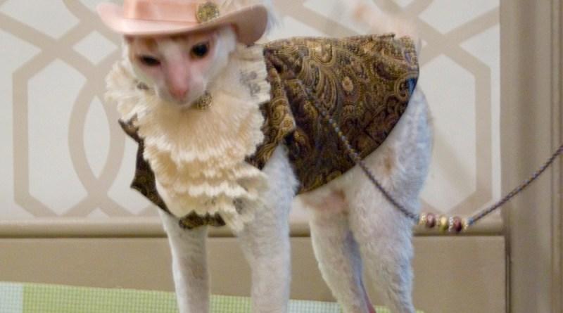 cat dressed as gentleman