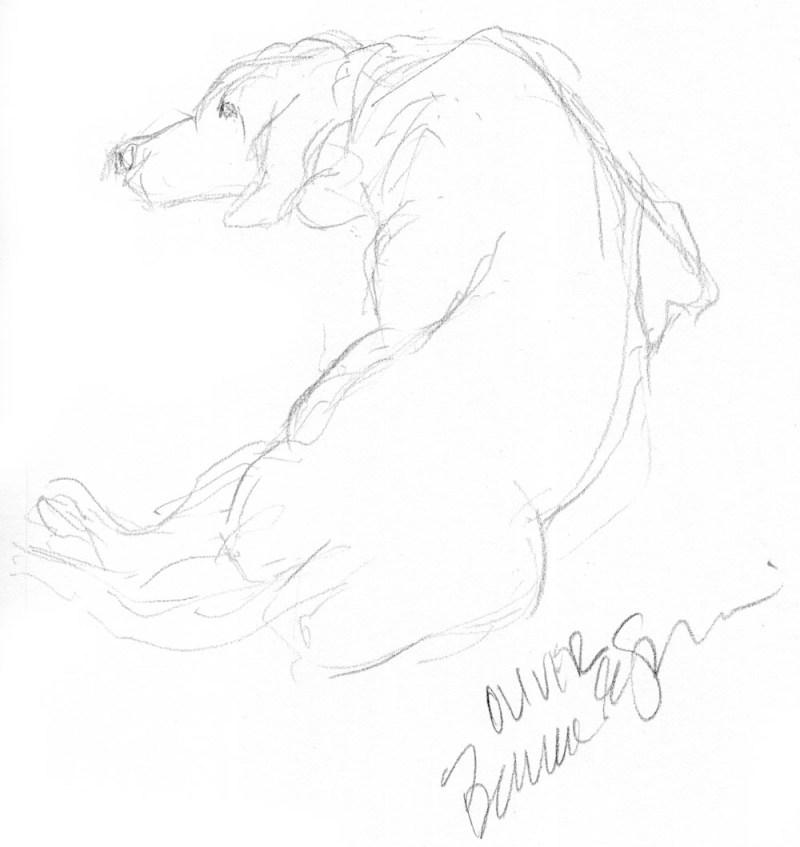 pencil sketch of dog