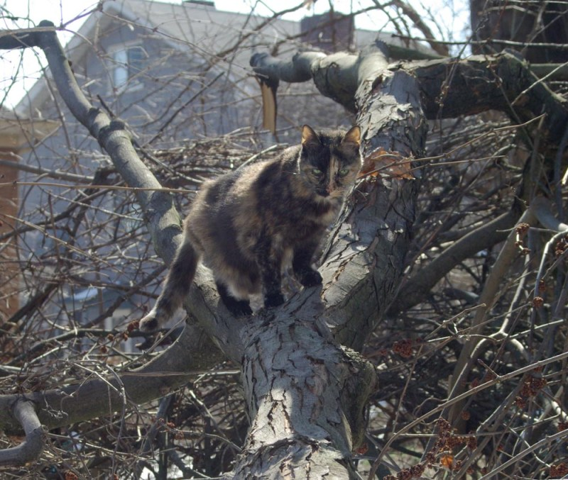 tortoiseshell cat on branch