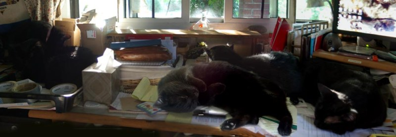 five black cats on desk