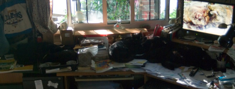 five black cats on desk.