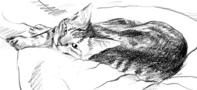 pencil sketch of tabby cat