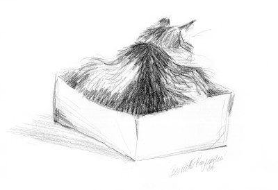 pencil sketch of cat in box