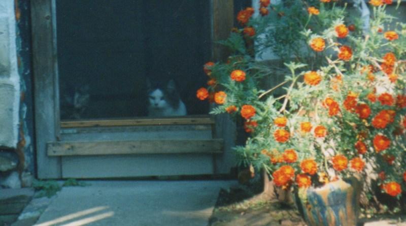 two cats at door