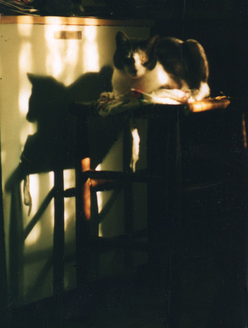 cat on stool with apron n evening sun