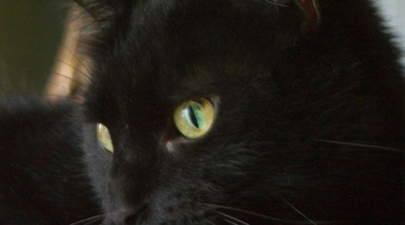 black cat with gold green eyes