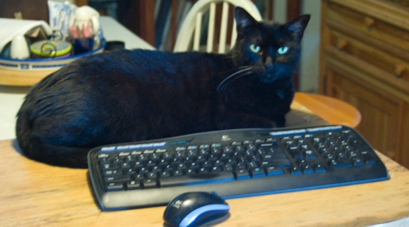 black cat with keyboard and mouse