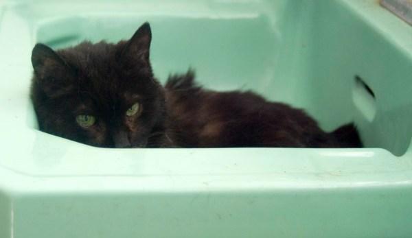 black cat in sink