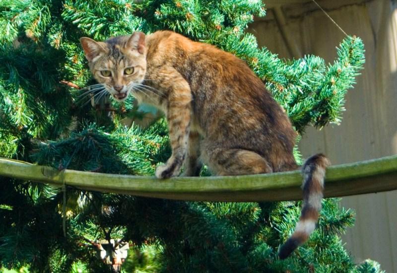 torbie cat on plank