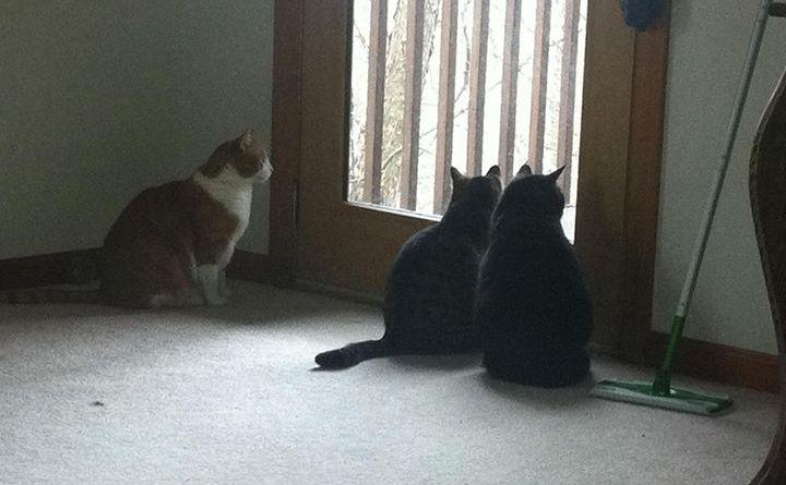 three cats looking out door.