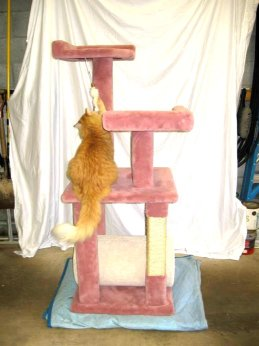 """Rose and cream carpeted, three level cat tree with 12"""" diameter tunnel and sisal rope scratch post. THIS IS HAND MADE!!! CAT TESTED, BUT NOT INCLUDED!! LOCAL PICK UP ONLY OR >> **FREE DELIVERY in the Pittsburgh area for any bid of $250 or more."""