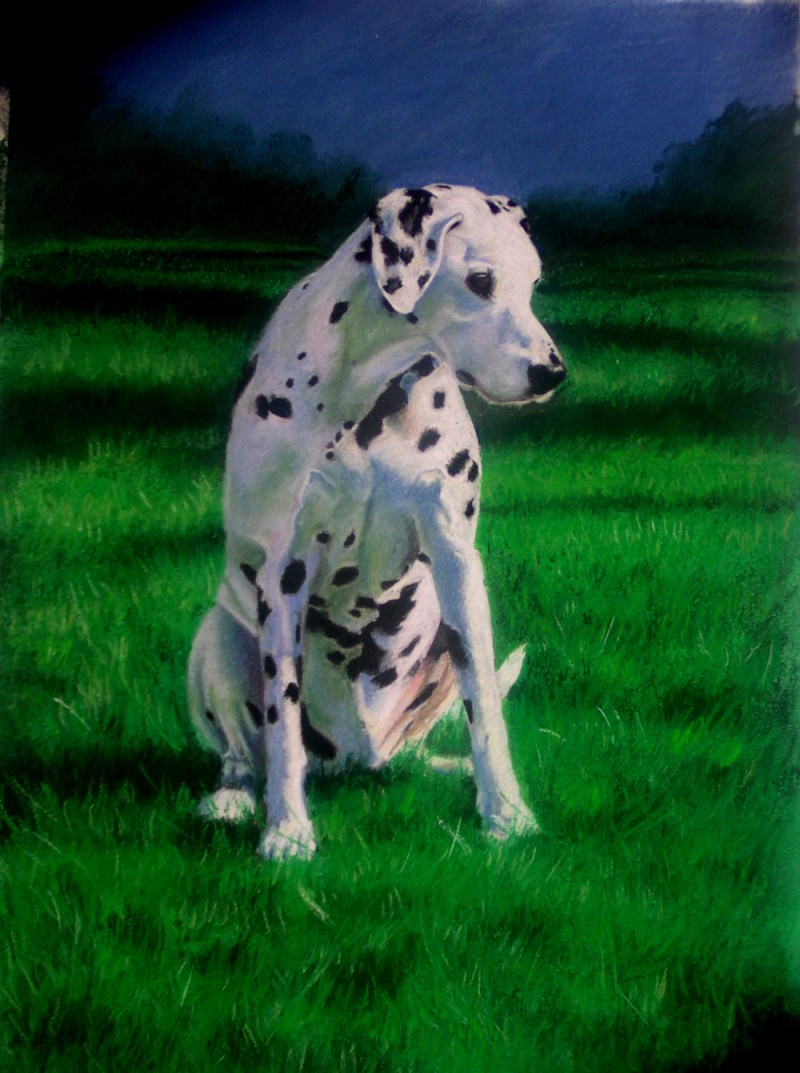 pastel portrait of dalmation