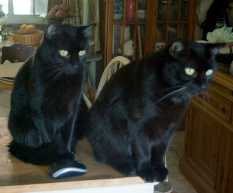 Mr. Sunshine and Giuseppe may be considering a snack after breakfast.