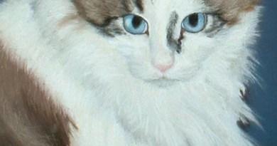 pastel portrait of cat