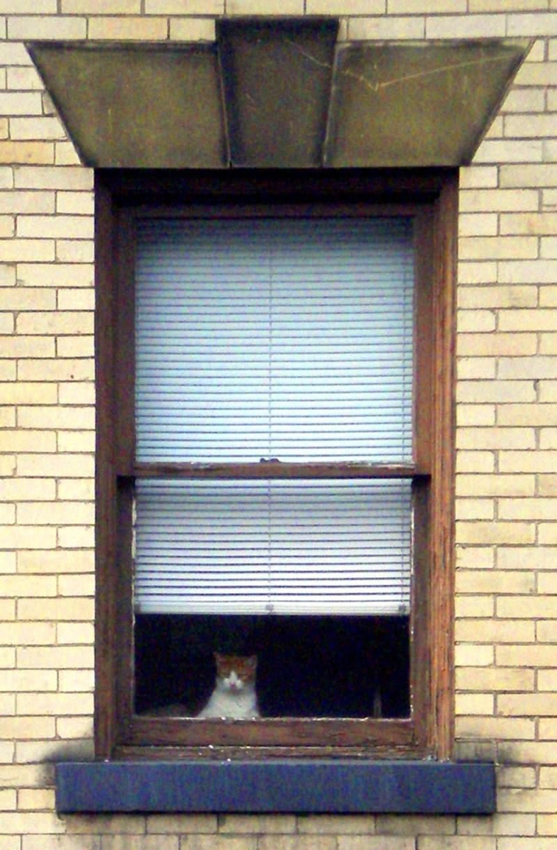 orange and white cat in window