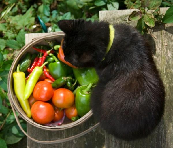 black cat with basket of vegetables.