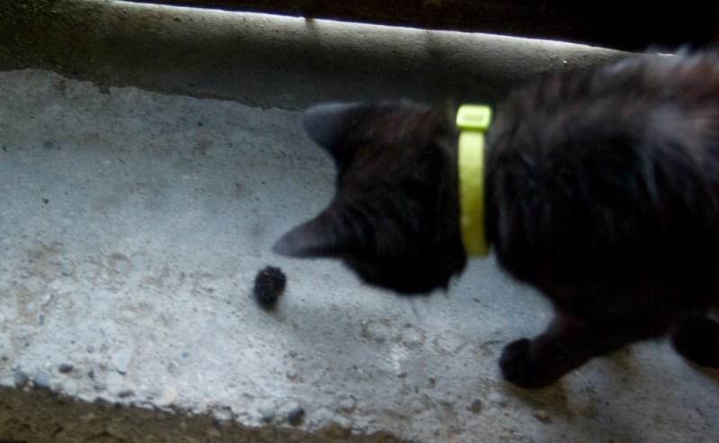 black caterpillar and black cat