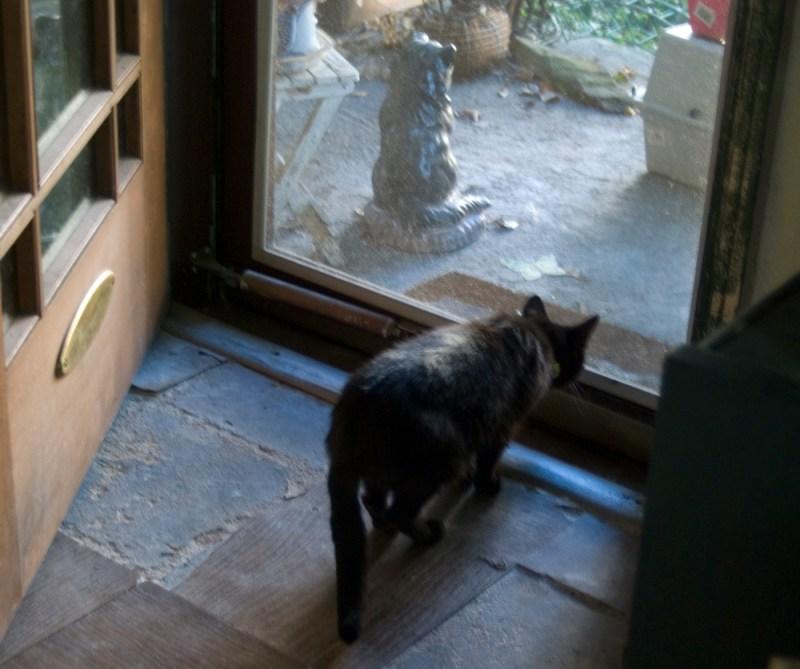 black cat looking out door.