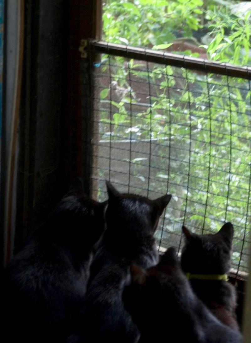 four black cats looking out the door