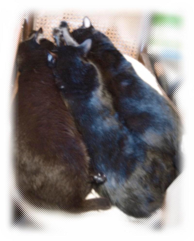 black cats on rocker.