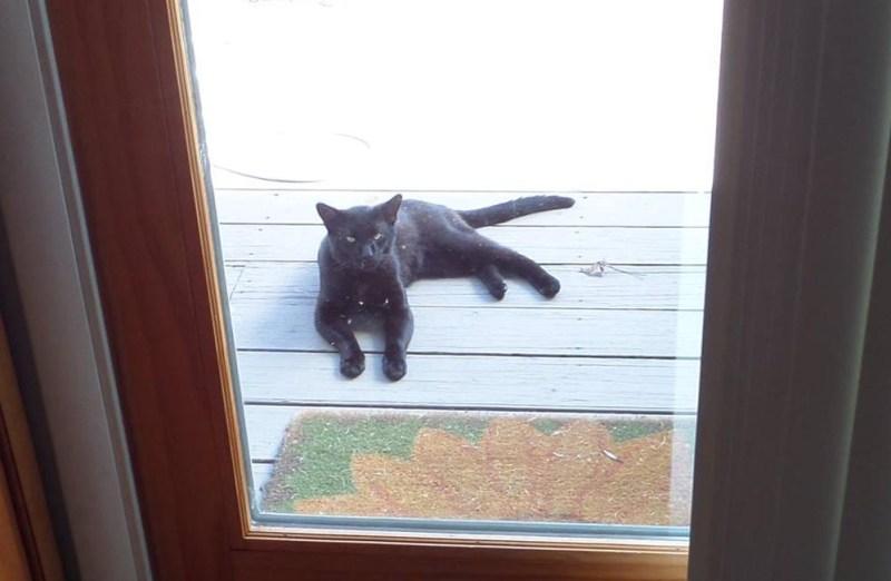 black cat outside door