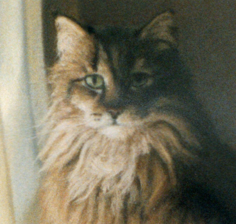 detail of pastel portrait of long-haired tabby