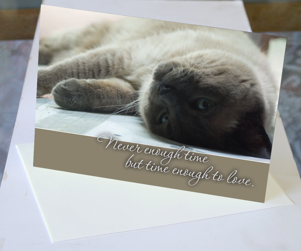 animal sympathy card for cat