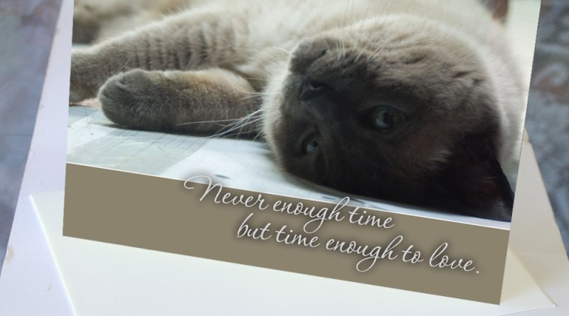 animal sympathy card for cat
