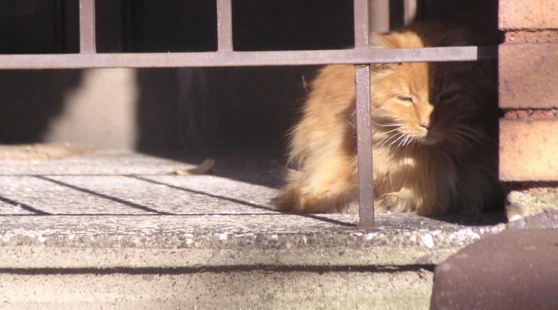 orange cat on porch