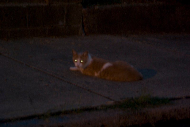 orange and white cat in the dark with glowing eyes