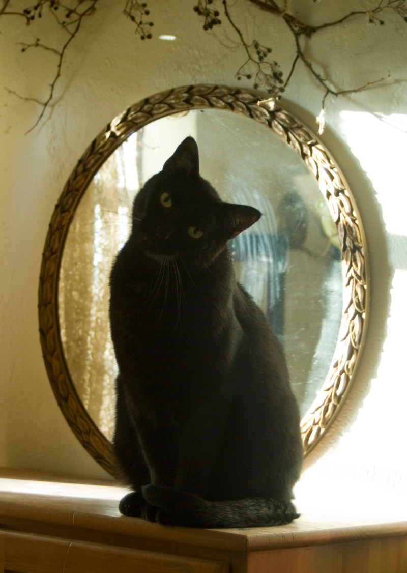 black cat in front of mirror